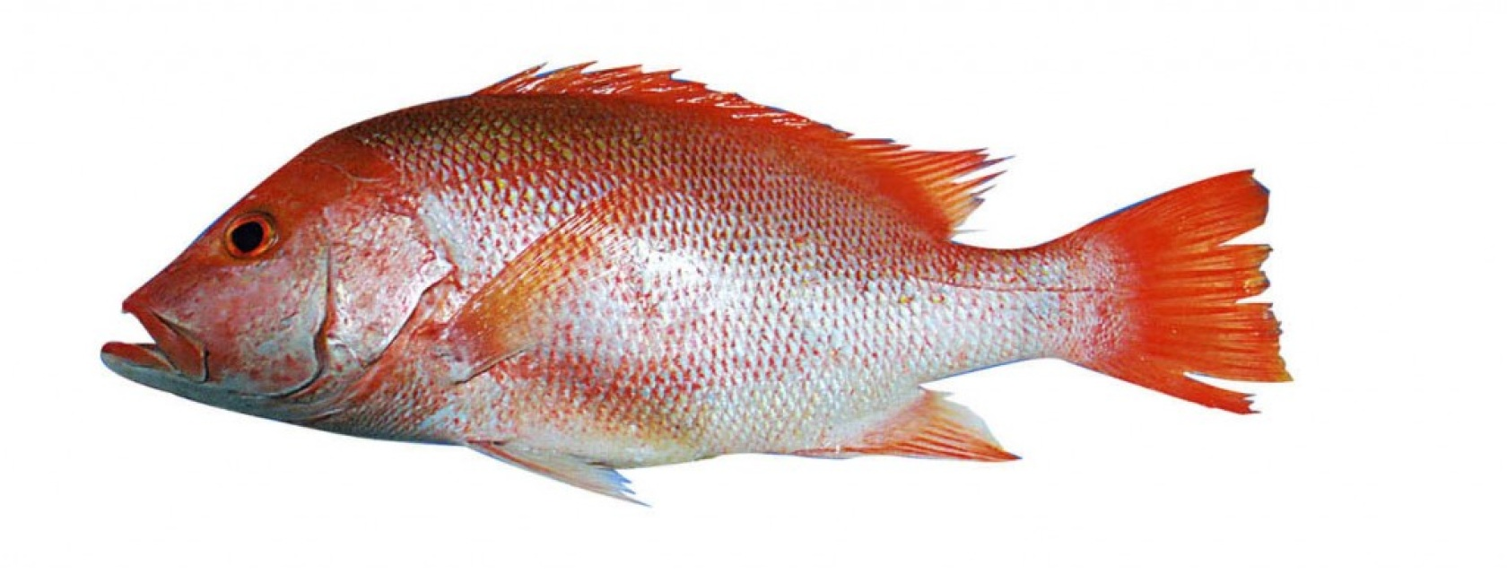 how to fish for red snapper